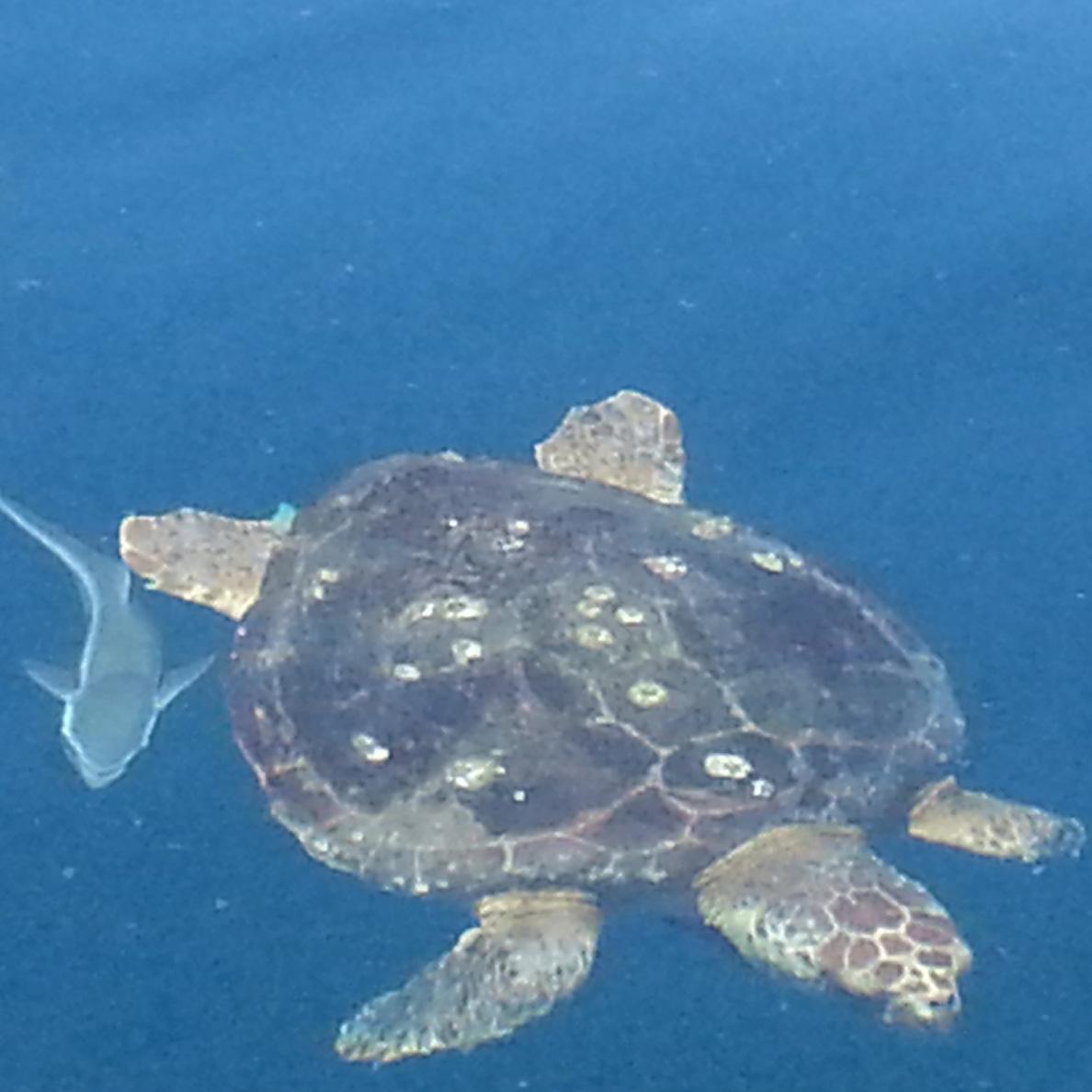 turtle2ramoras - min-1